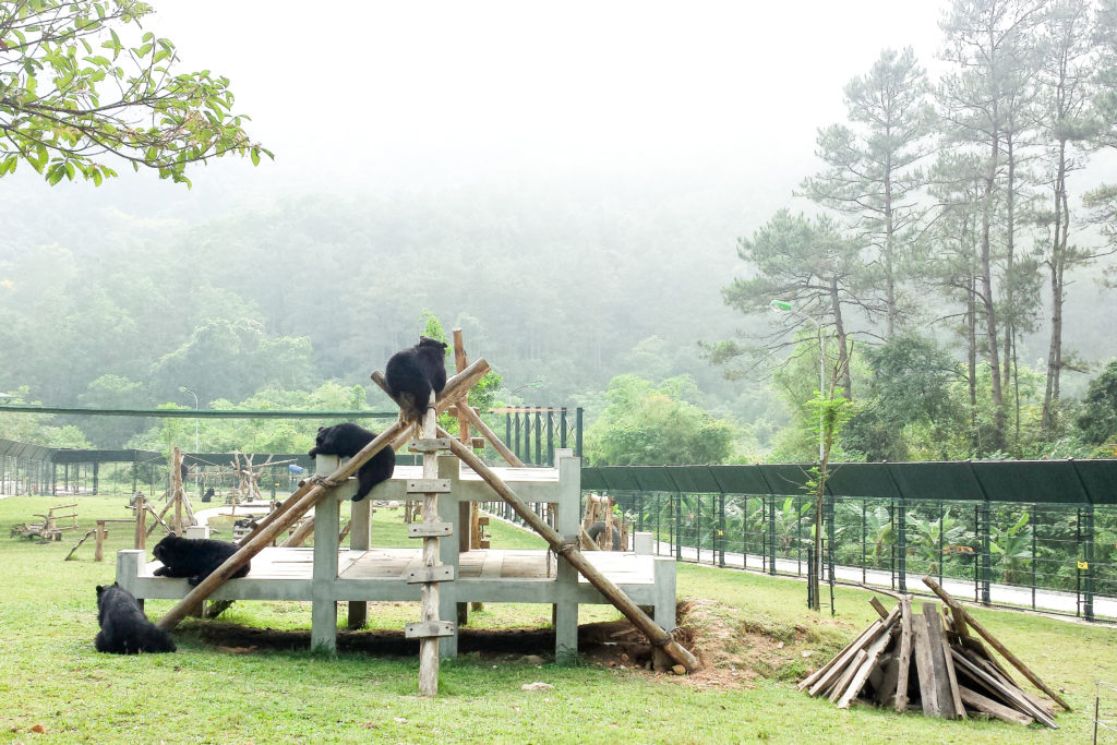 The Bears At Vietnam Bear Rescue Centre