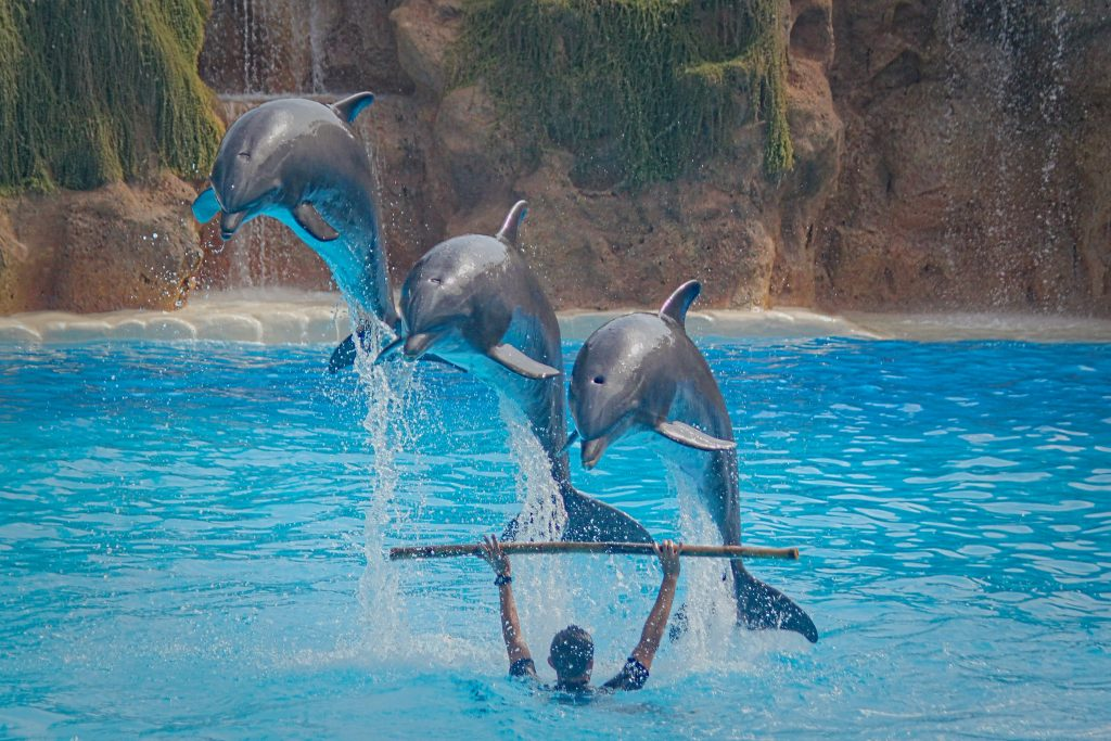 Dolphins performing. Credit: Dusan Smetana on Unsplash.