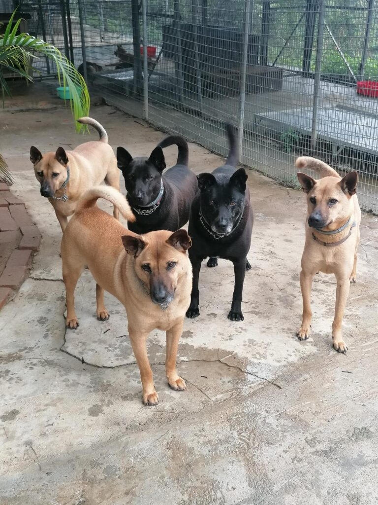 Dogs seeking new homes. Credit: Sai Kung Stray Friends